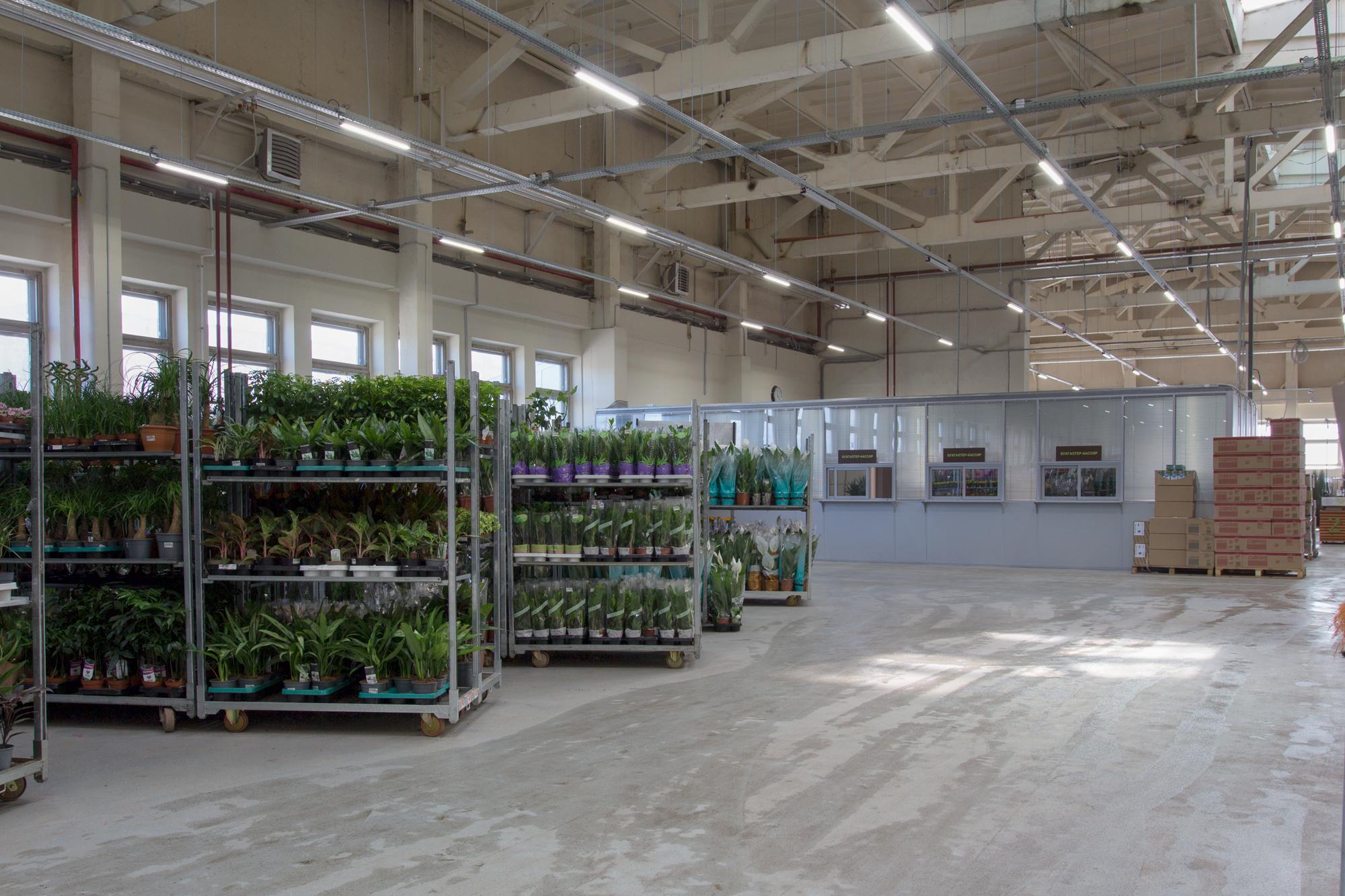 Реализованный проект освещения цветочного магазина «7 Цветов»